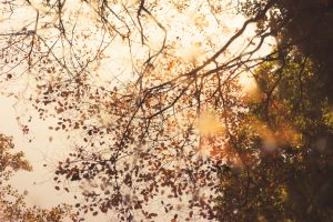 efterår brun blade træ (Foto: Unsplash)