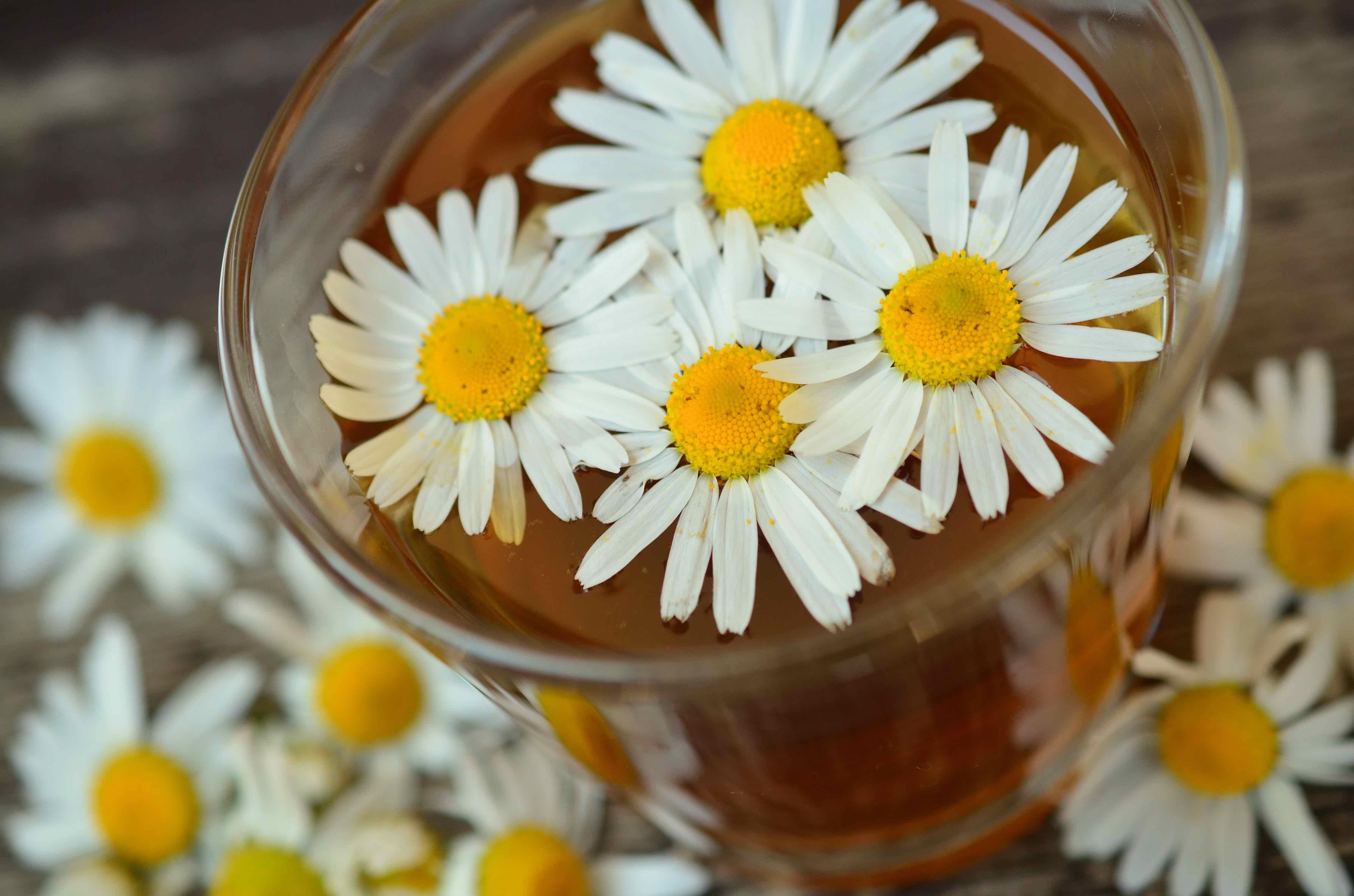 kamille, kamillete, te, chamomile tea