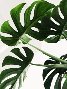 grønne planter blomst indretning (Foto: Unsplash)
