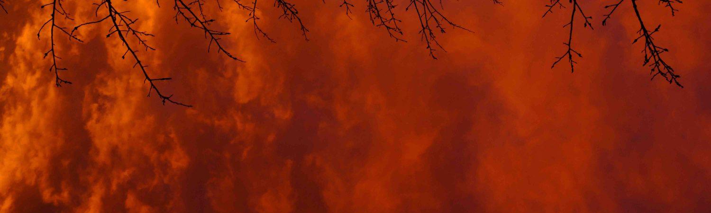 rødt røg, red smoke, regnskov, skovbranc