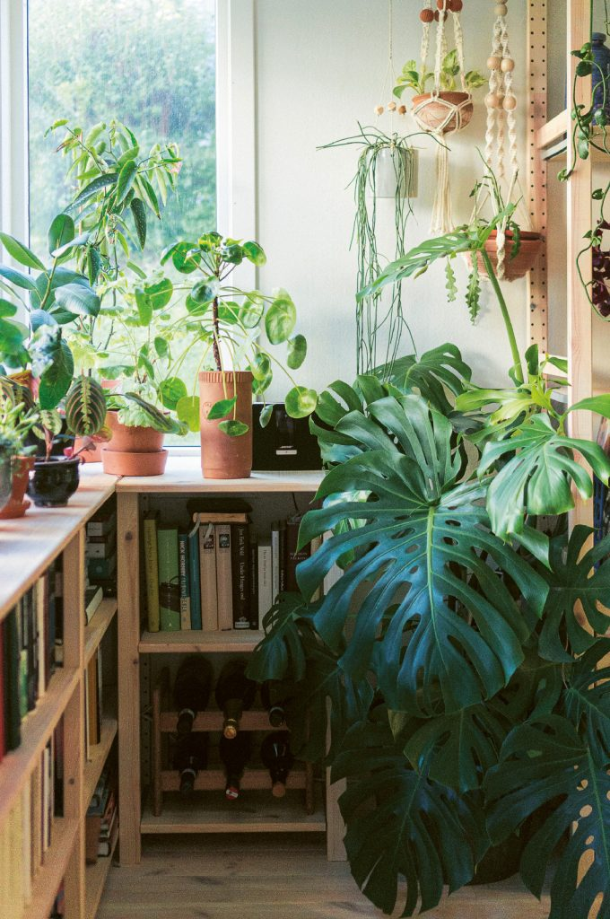 gro grønne planter indendørs bog (Foto: Jenny Leite-Vikra)