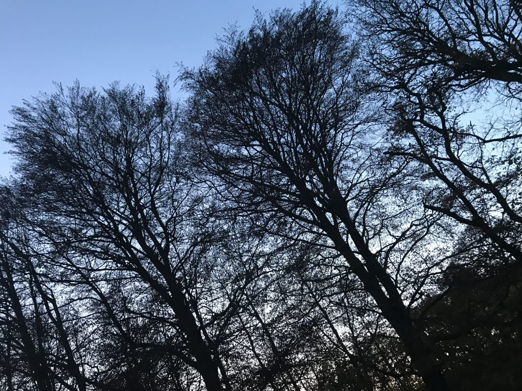 malerklemmen osted sara blædel pigen under træet bog bogtur bornholm osted borup (Foto: MY DAILY SPACE)
