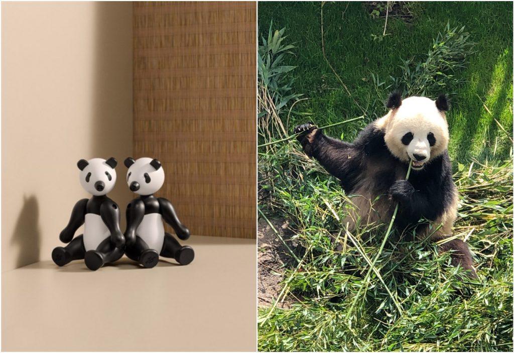 panda, kaybojesen, ønske, jul, Foto: KayBojesen og Ali Saleh