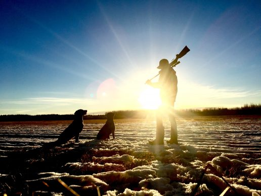 jagt hunde jagthunde