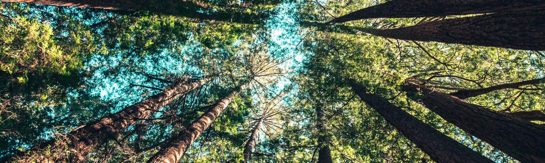 natur himmel træ trætoppe (Foto: Unsplash)