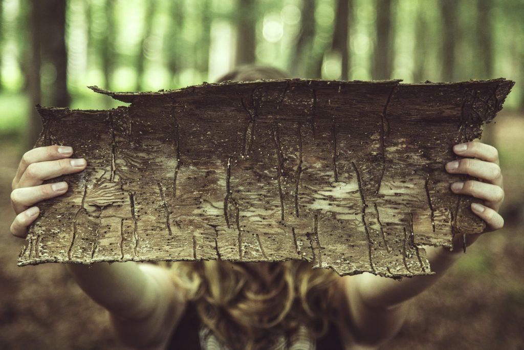 træ bark (Foto: Unsplash)