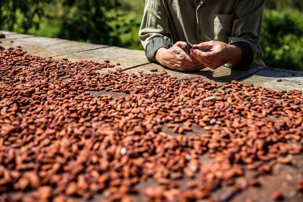 henrik bodholdt maleku costa rica chokolade (Foto: Henrik Bodholdt)