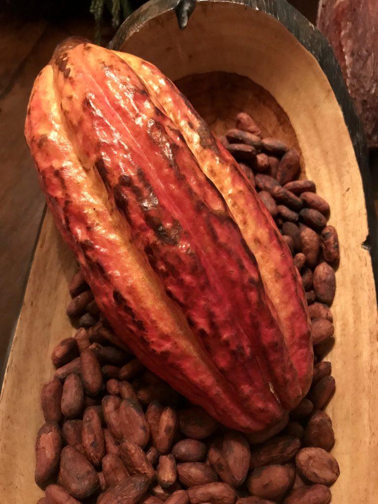 kakaobønner kakaofrugt chokolade (Foto: MY DAILY SPACE)