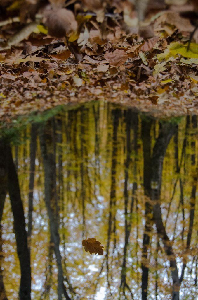 blade efterår skov sø træer (Foto: Unsplash)
