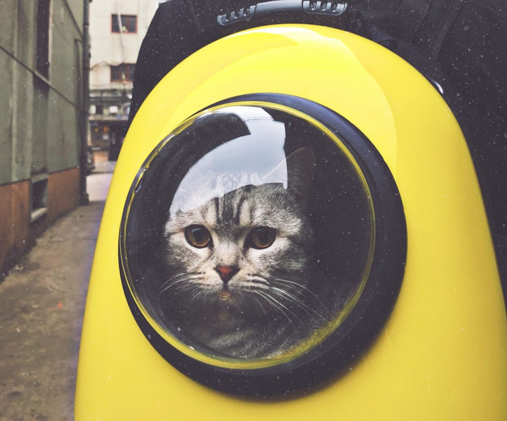 kat katte (Foto: Unsplash)