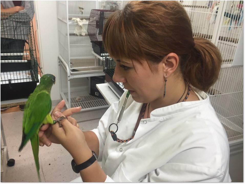Papegøje samarbejder med usynlig partner, forskning, fugle, undersøgelse. (Foto: PR)
