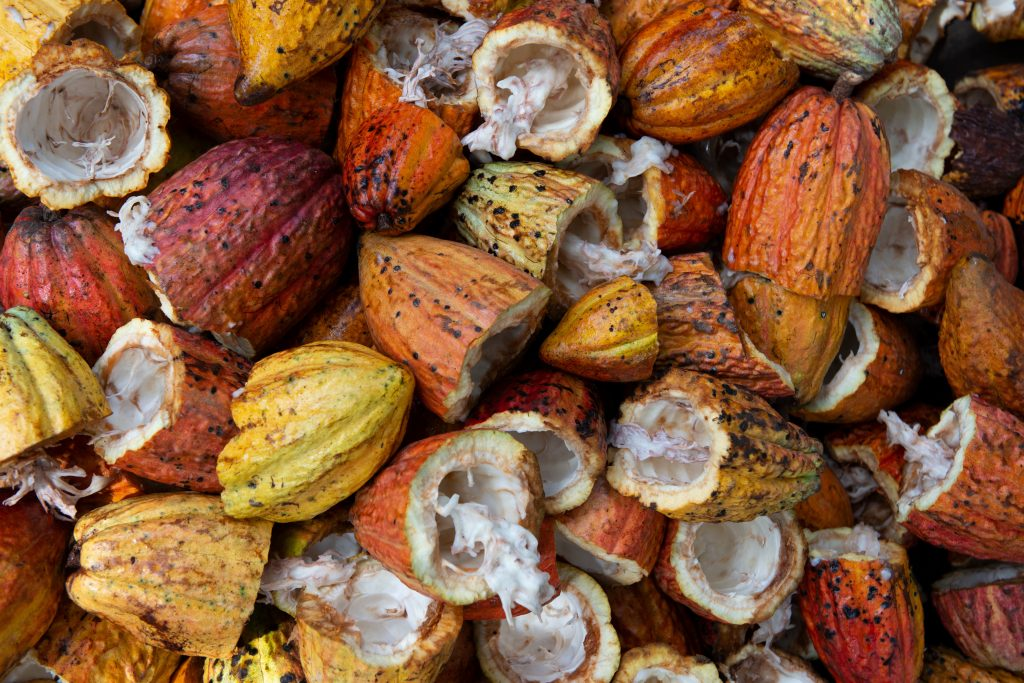 kakaobønner kakaofrugt chokolade (Foto: Unsplash)