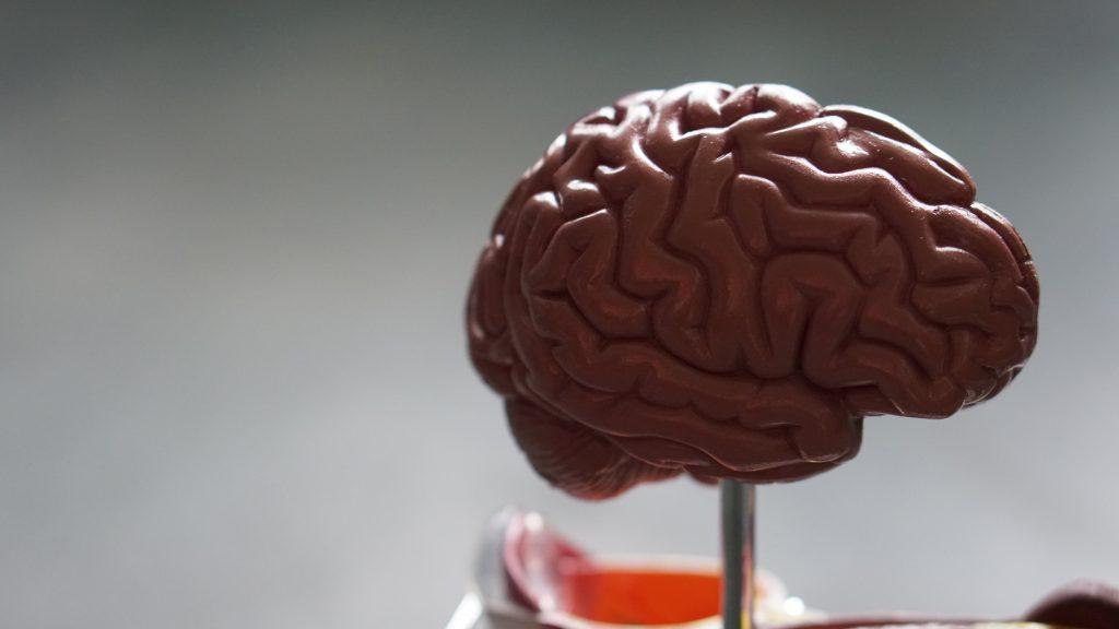 hjerne (Foto: Danmarks Frie Forskningsfond )