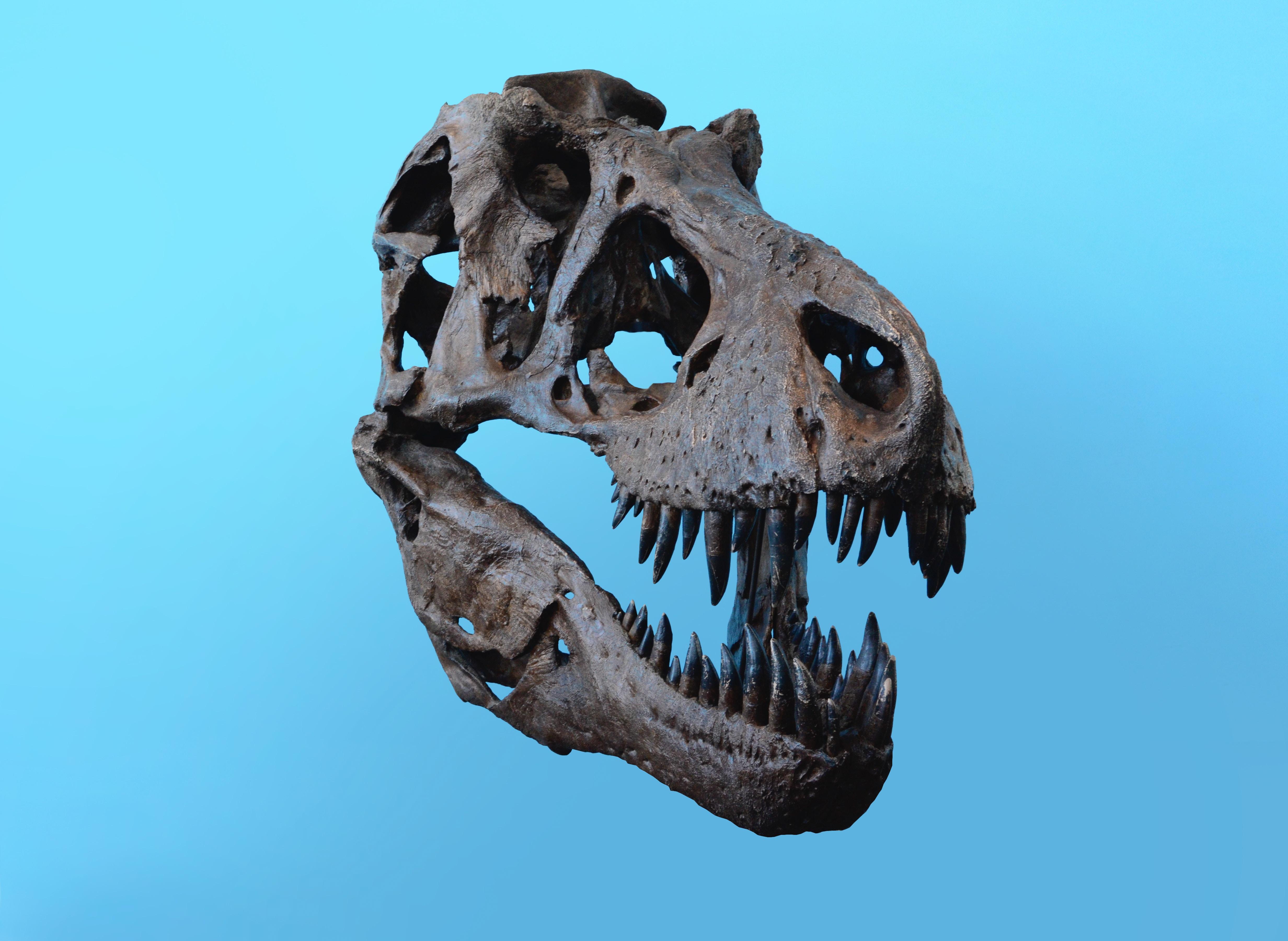 dinosaurus, dinosaur, fund, ny art. (Foto: Unsplash)