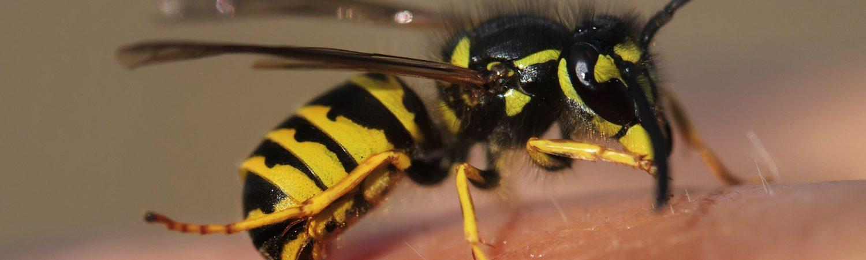 hveps, bi, wasp, bee, insekt