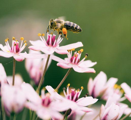 blomst natur bi hveps (Foto: Unsplash)