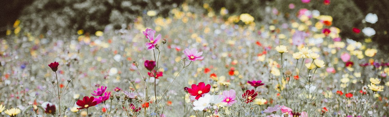 Flowers, blomster. Foto: Unsplash)