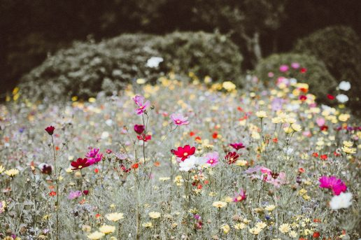 Flowers, blomster. Foto: Unsplash)