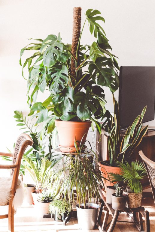 Planter, grønt. stue. (Foto: Unsplash)