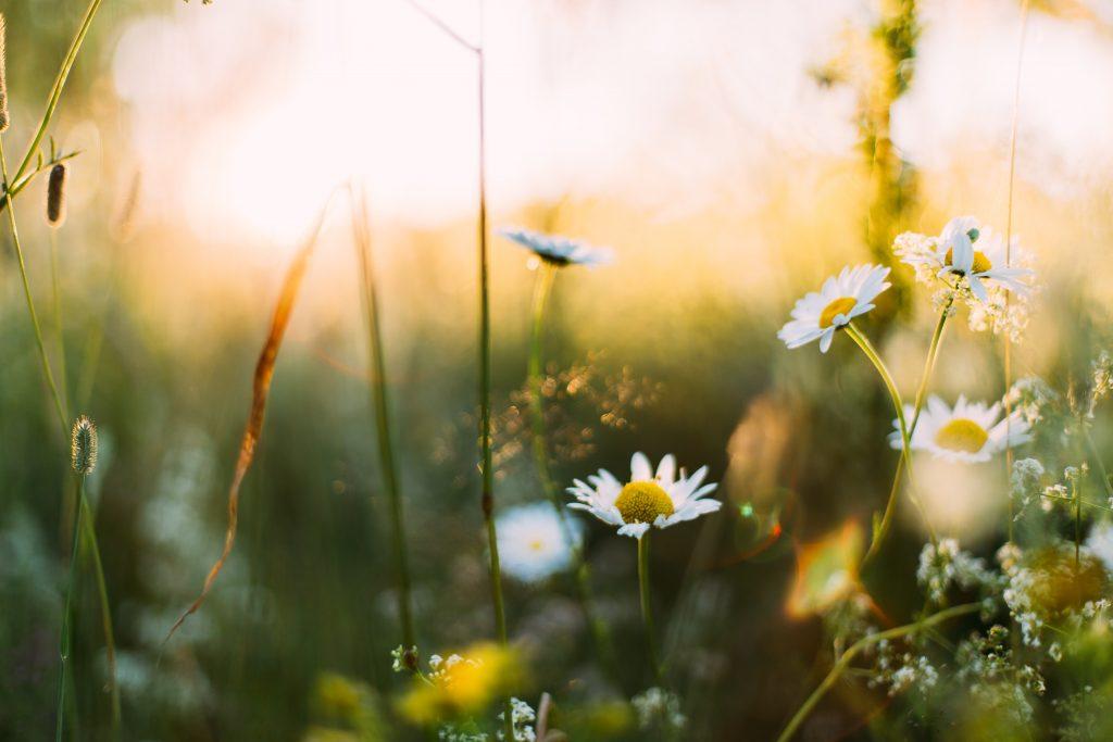 sommer forår blomster vejr (Foto: Unsplash)