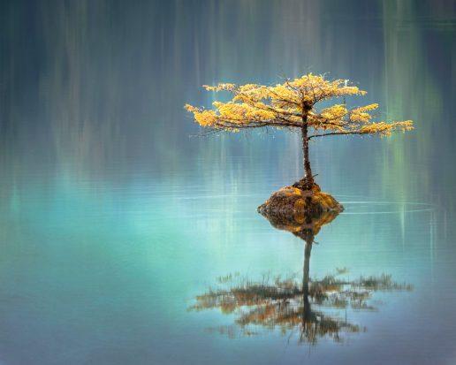 zen ro natur meditation (Foto: Unsplash)