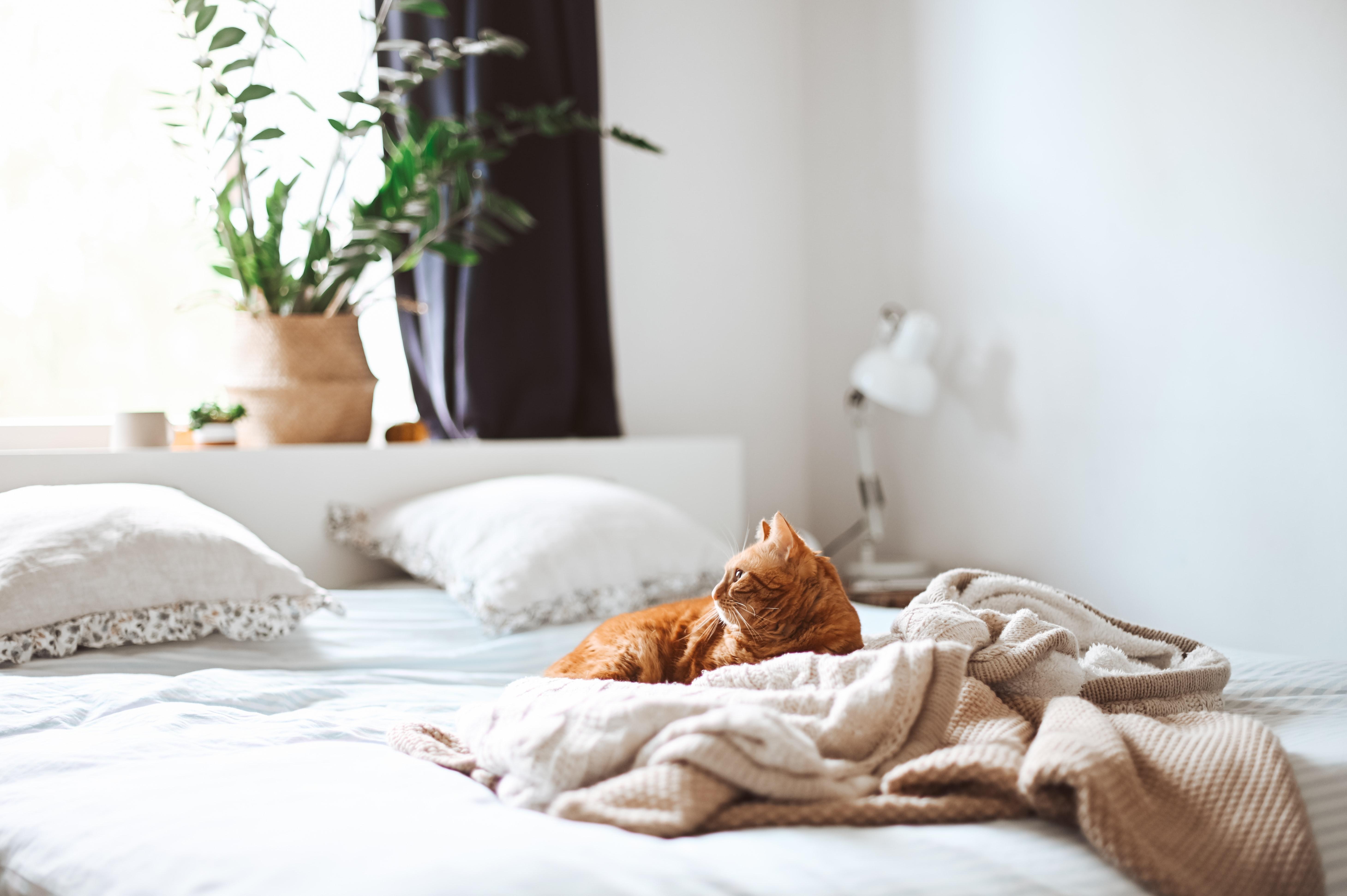 Seng, soveværelse, kat, indeklima. (Foto: Unsplash)