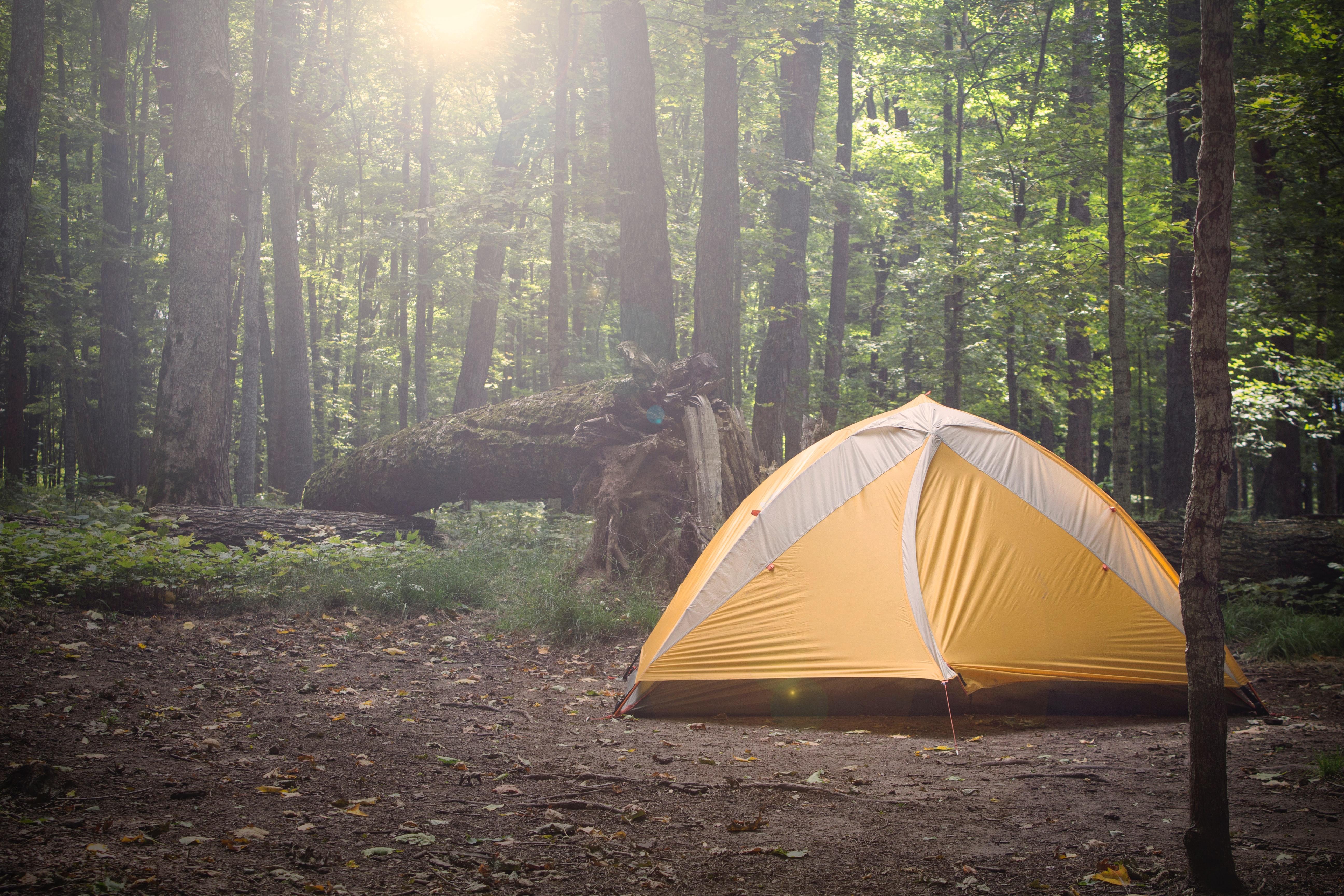 Natur, telt, skov. (Foto: Unsplash)