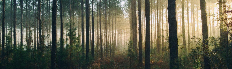Natur, skov, træer, lys. (Foto: Unsplash)