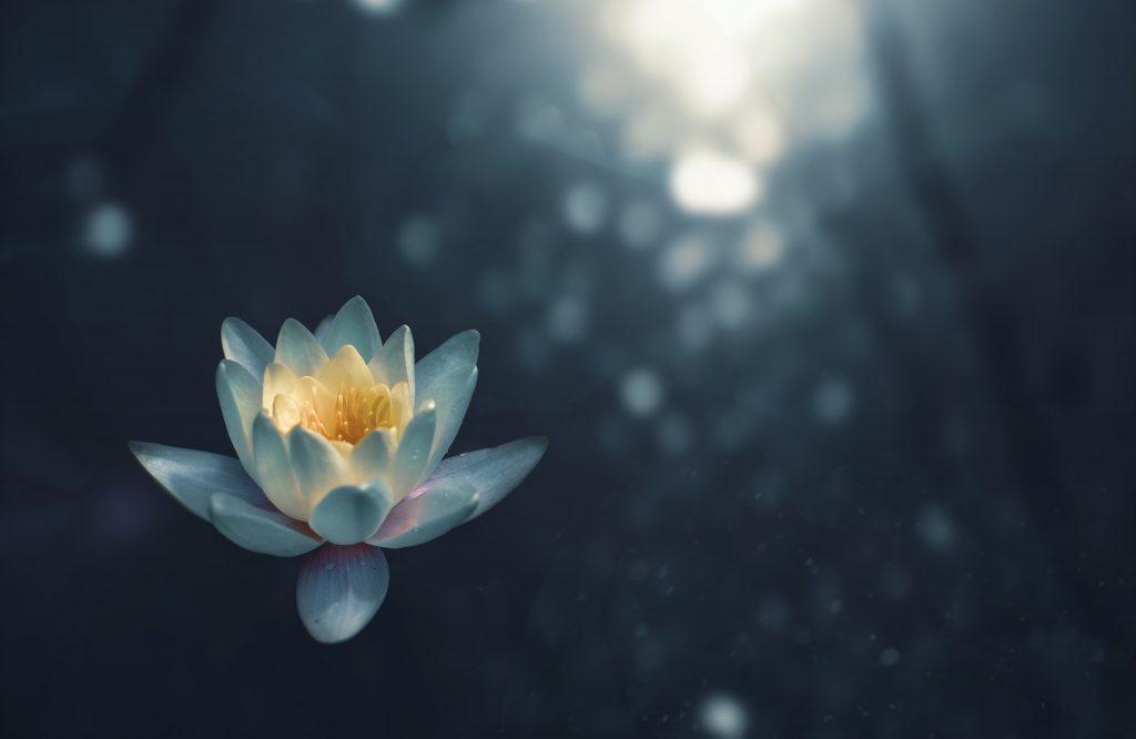 zen lotus lotusblomst ro meditere (Foto: Unsplash)