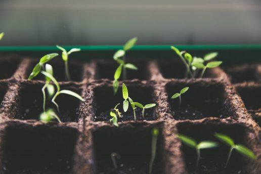 have, plante, blomster, spir, grøntsager