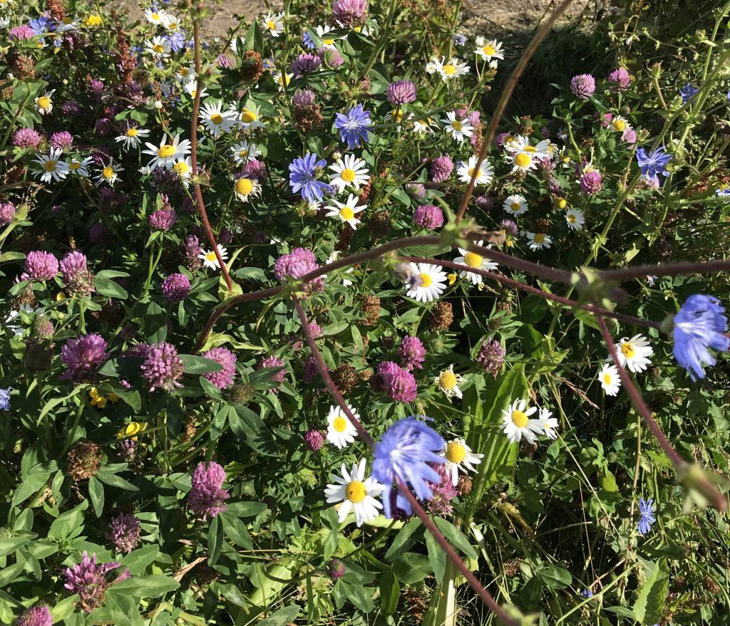 natur blomst vild have(Foto: Unsplash)