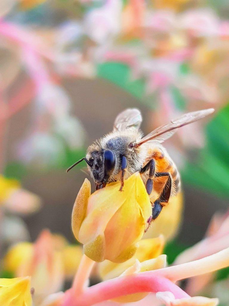 bi natur blomst (Foto: Unsplash)