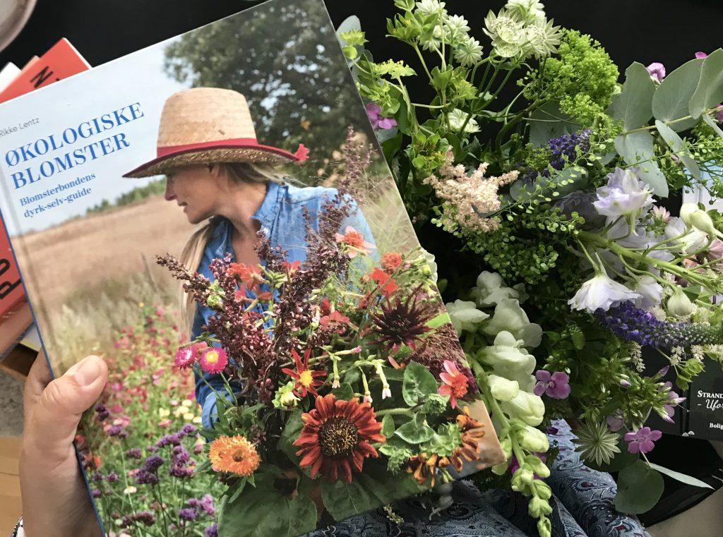 bog brede blomster havekiost økologiske blomster (Foto: MY DAILY SPACE)
