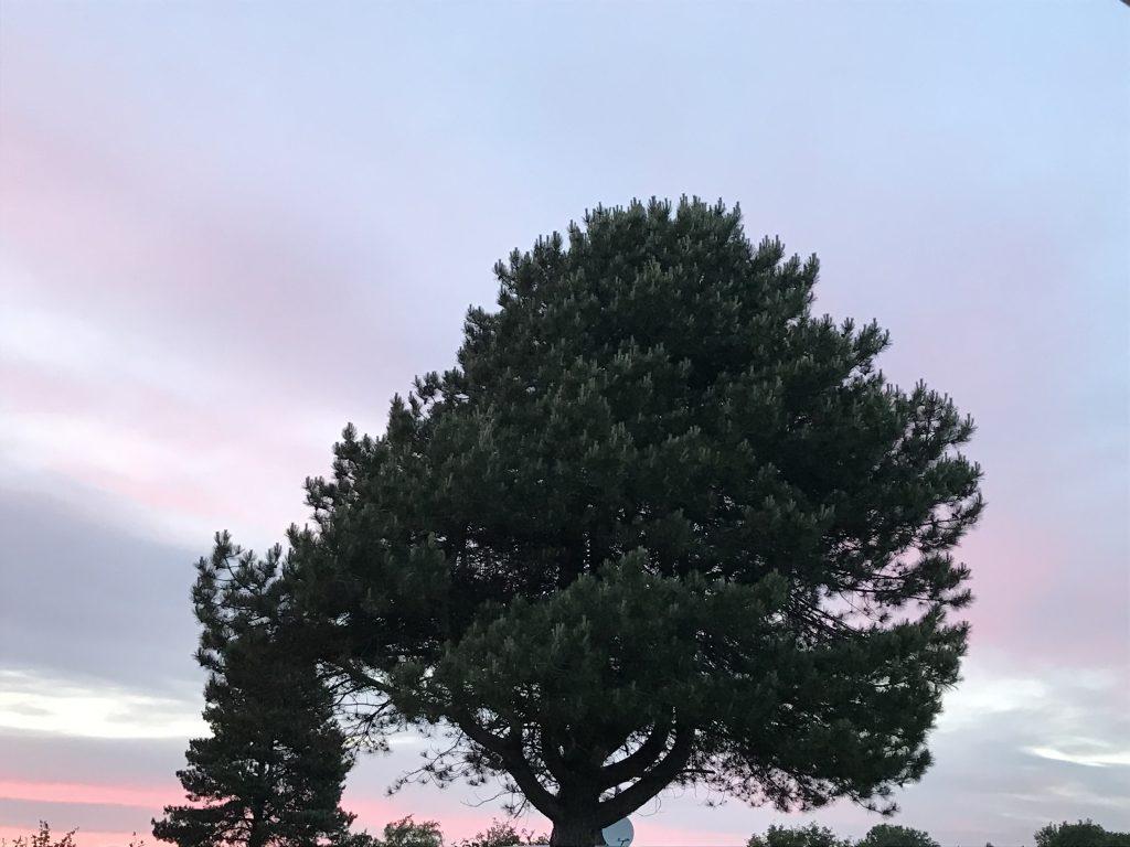 træ solnedgang sommerhus trætop drøsselbjerg (Foto: MY DAILY SPACE)