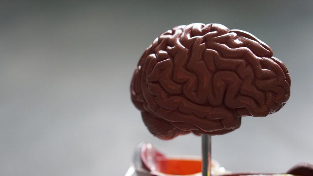 hjerne forskning (Foto: Unsplash)