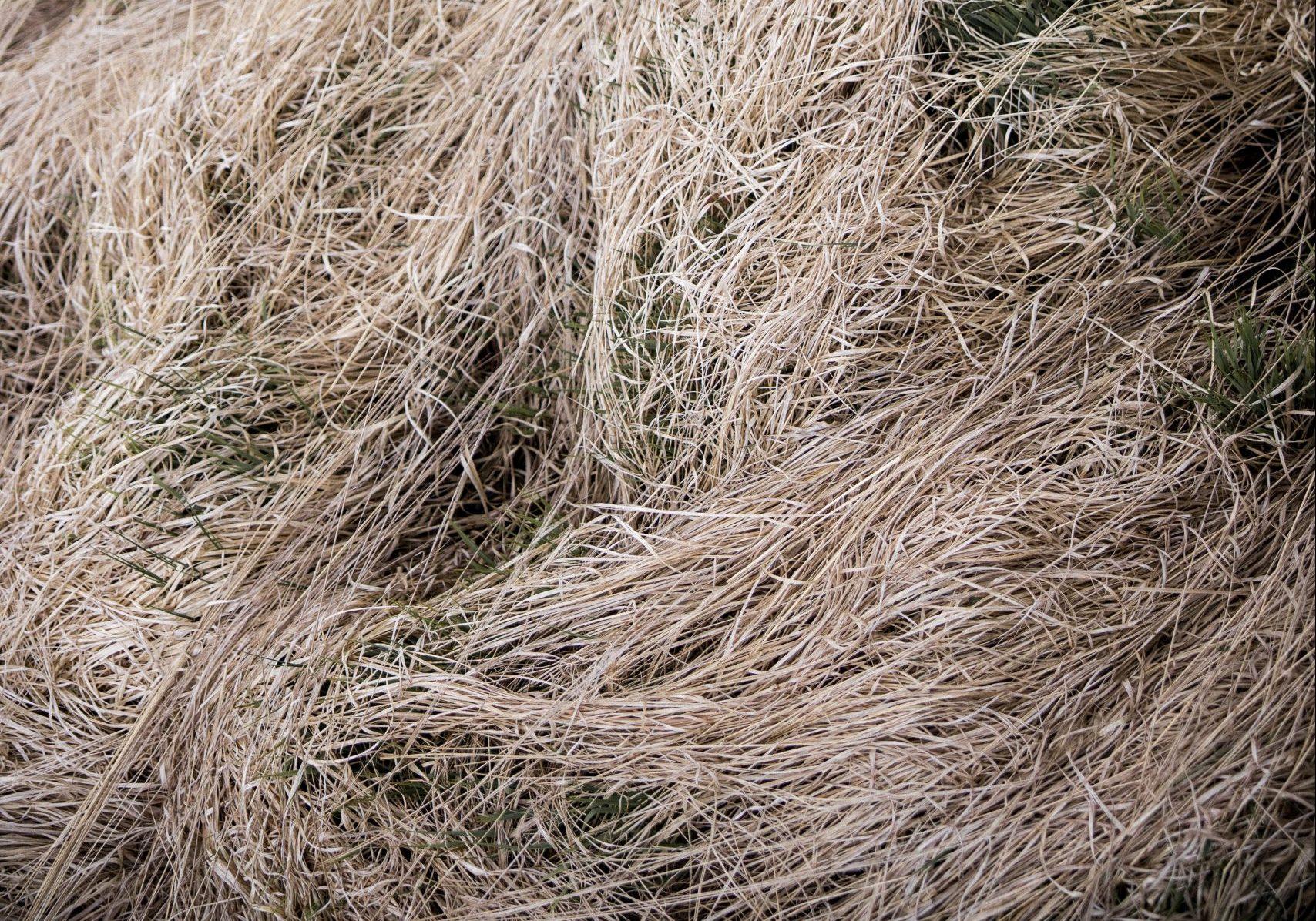 tørke, tørt (Foto: Unsplash)