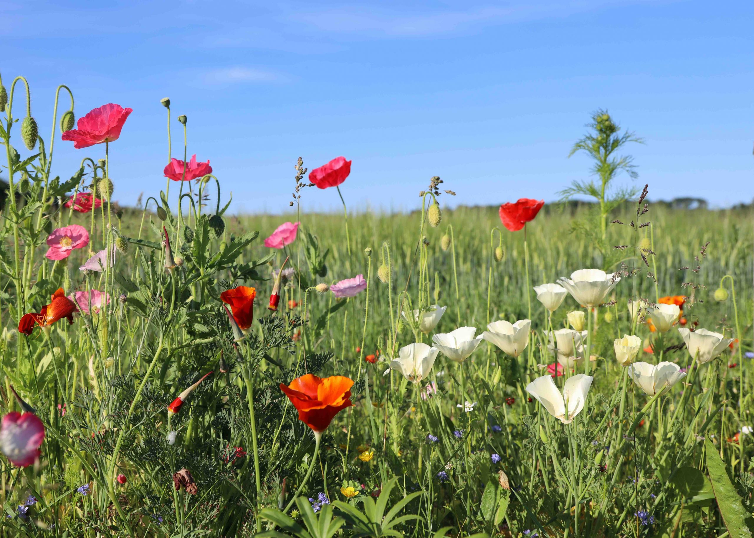 blomster, mark, bier, planter