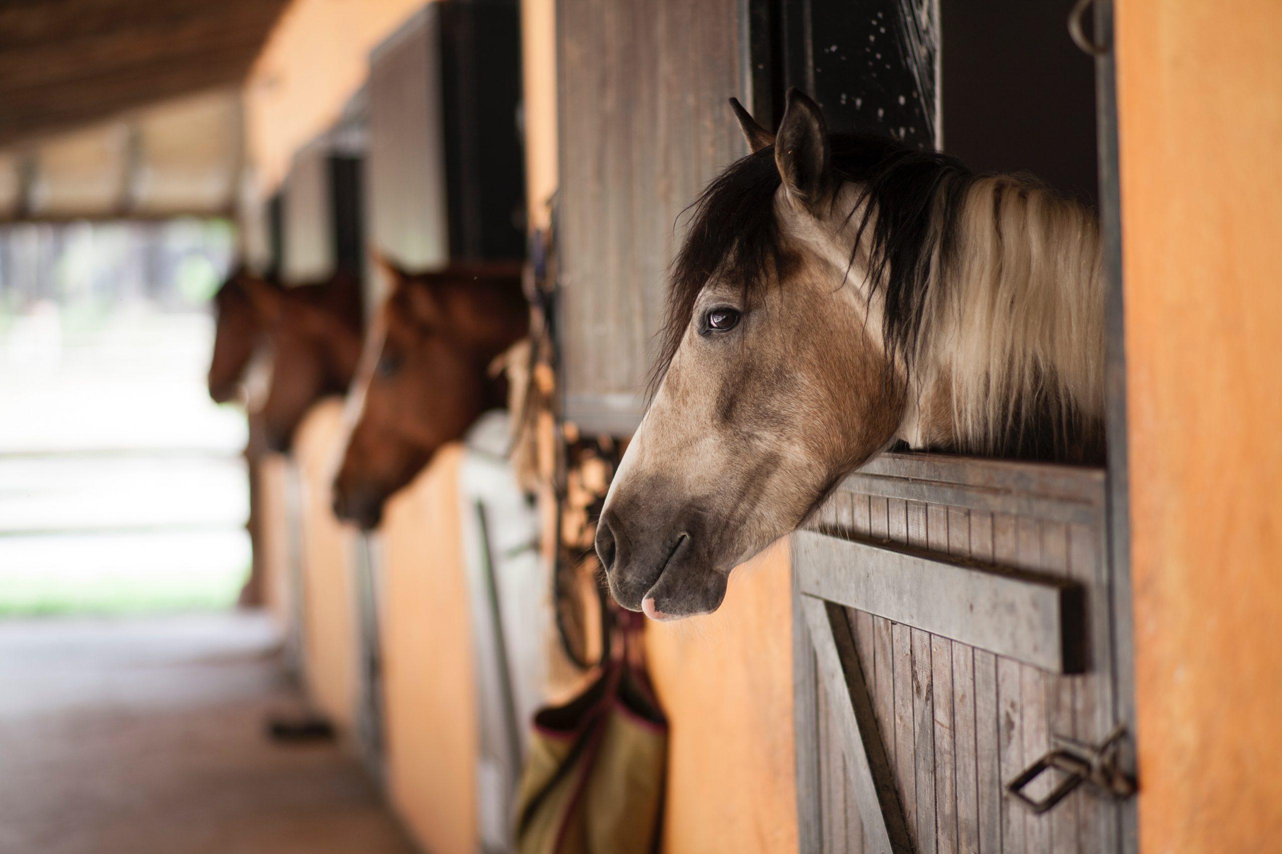 hest, stald