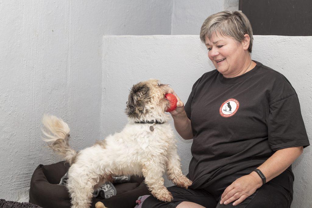 Dyreværnet - Foreningen til Værn for Værgeløse Dyr hund kæledyr (Foto: PR)