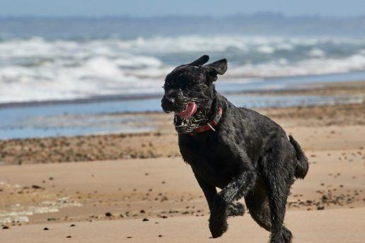 hund kæledyr (Foto: PR)