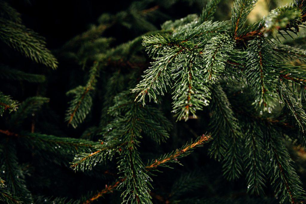 gran jul juletræ (Foto: Unsplash)