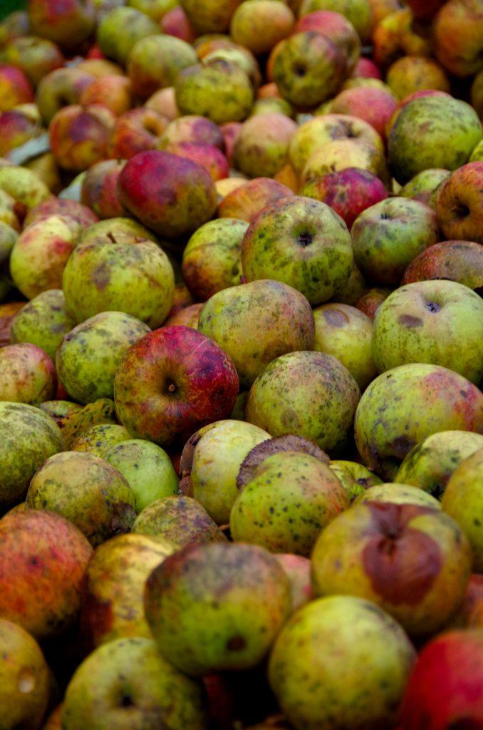 æble æbler frugt grimme (Foto: Unsplash)