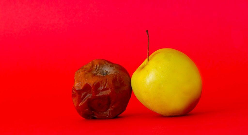 æble mug råddent (Foto: PR)