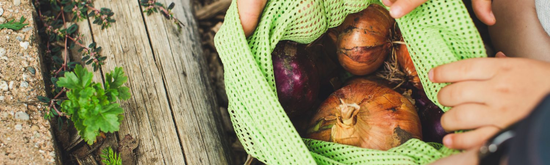 grøntsag løg natur (Foto: Unsplash)