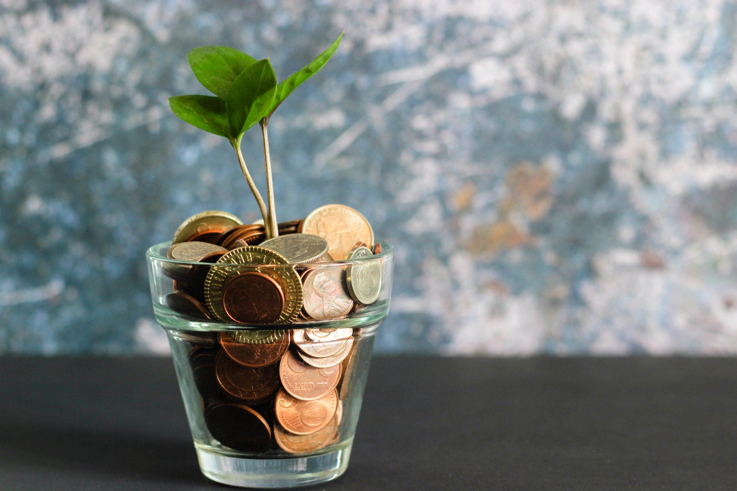 penge, vokse (Foto: Unsplash)
