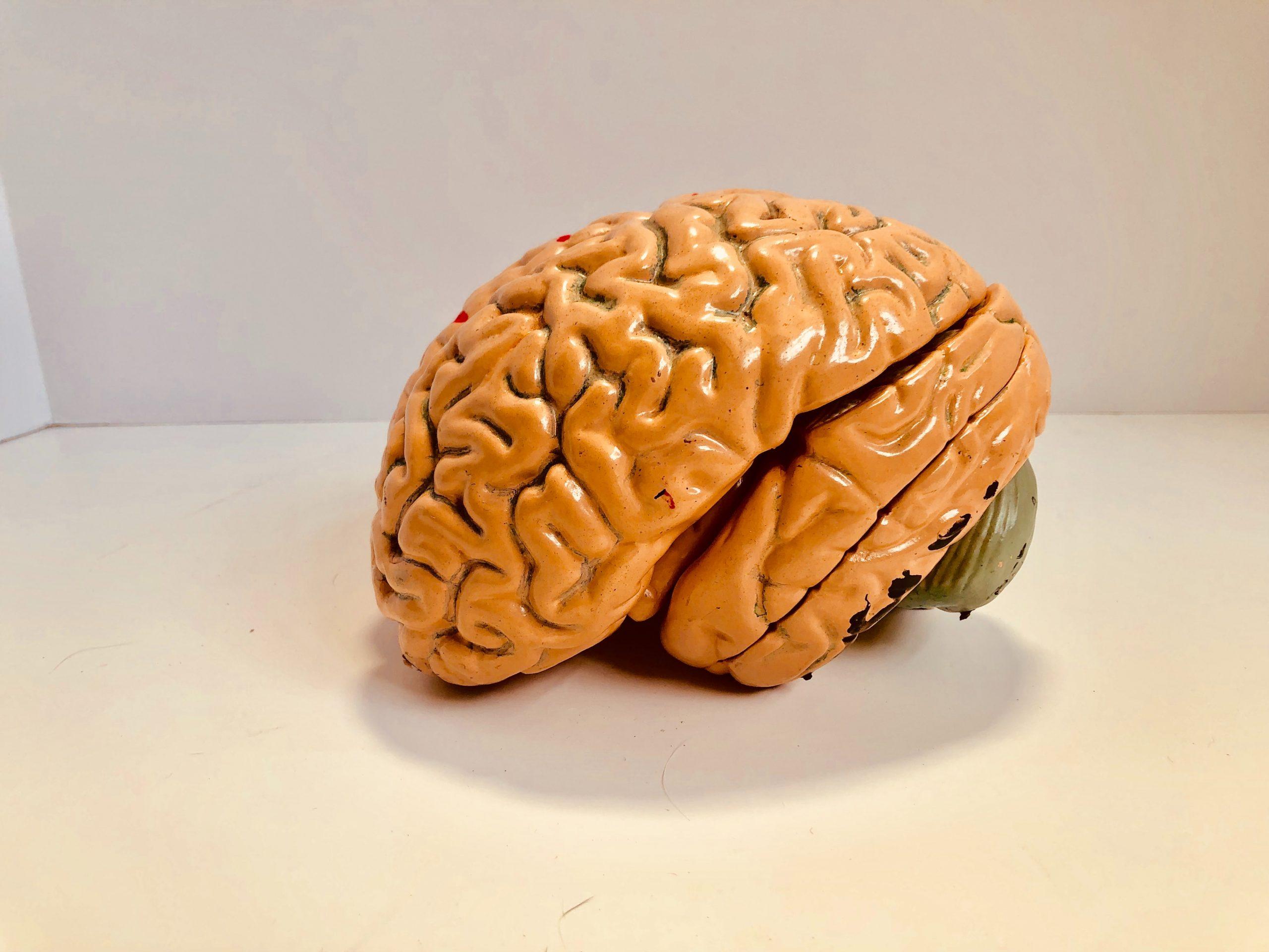 hjerne, tanker (Foto: Unsplash)