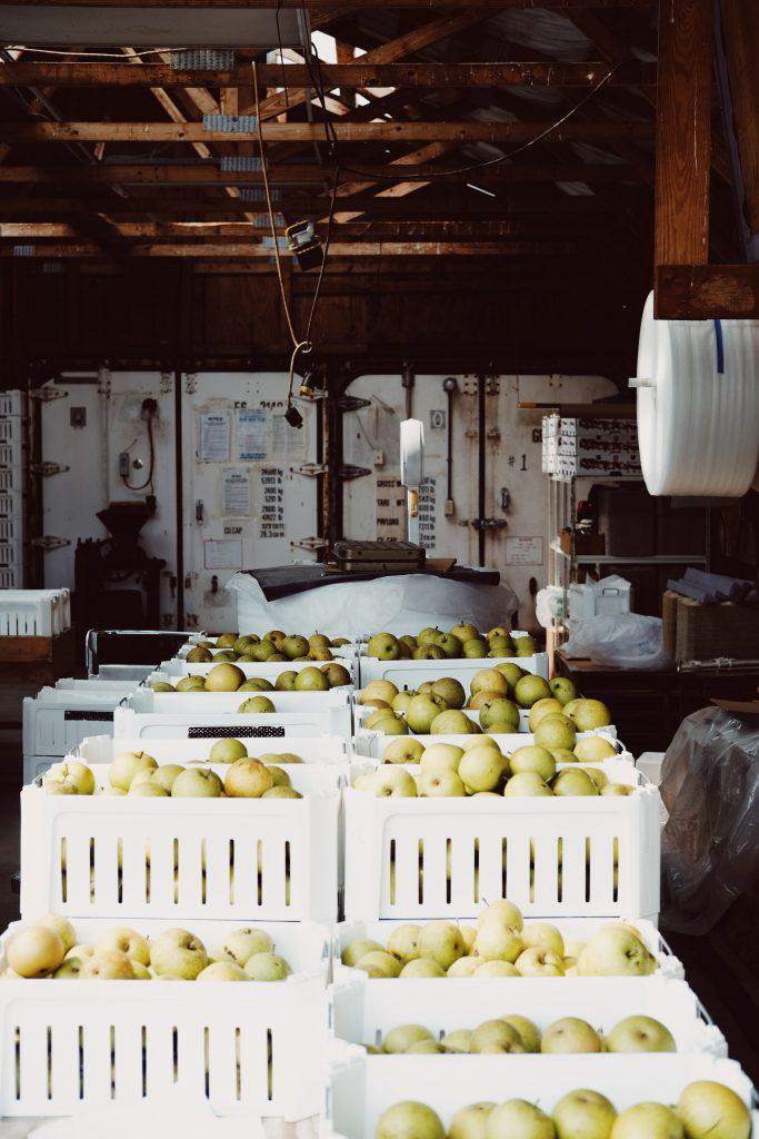 æble æblehøst most (Foto: Unplash)