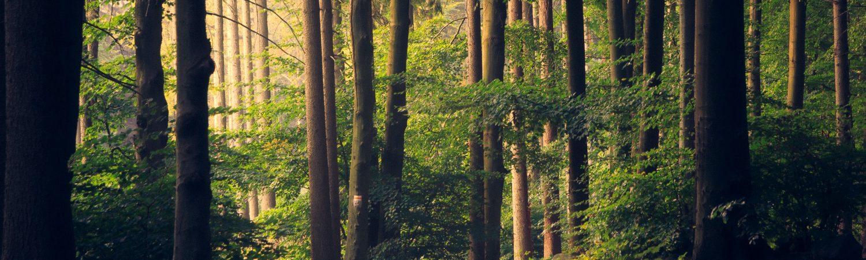 skov natur verdensmål træer miljø planter (Foto: Unsplash)