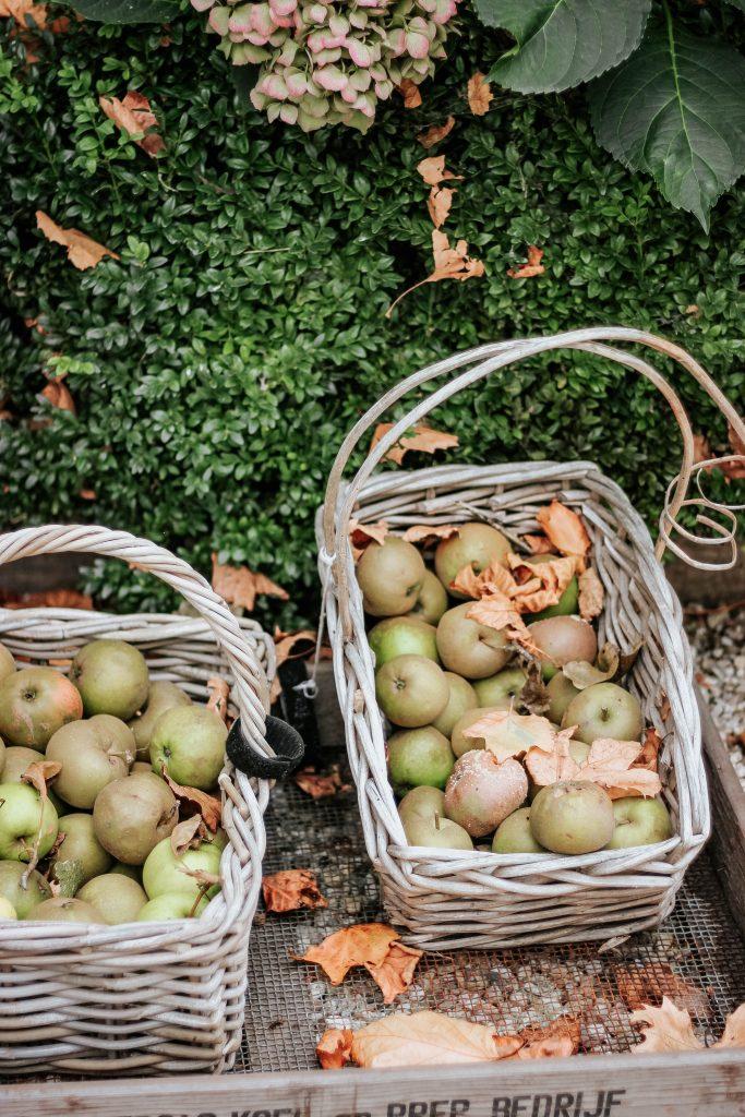 æble æbler kurv med æbler efterår (Foto: Unsplash)