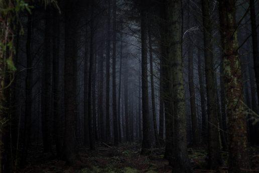 træer, uhygge (foto: unsplash)